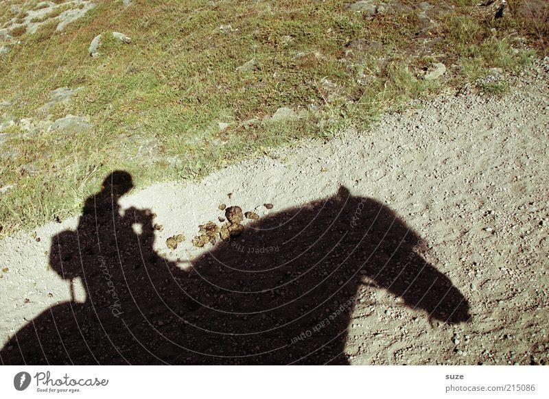 Reit im Winkel Freizeit & Hobby Reiten Tourismus Ausflug Abenteuer Mensch 1 Umwelt Natur Schönes Wetter Wege & Pfade Tier Nutztier Pferd authentisch lustig