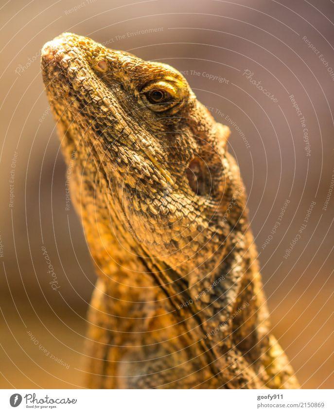 Strecken.... Ferien & Urlaub & Reisen Tier gelb orange wild elegant ästhetisch Wildtier Abenteuer fantastisch beobachten bedrohlich entdecken Wüste gruselig