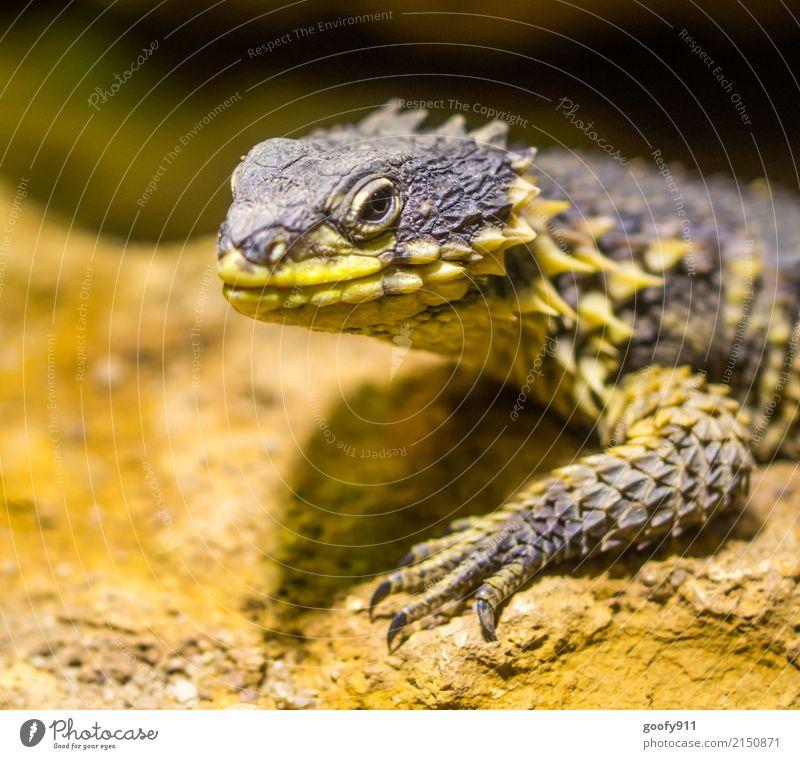 Starrer Blick... Natur Sommer Tier gelb Umwelt Frühling außergewöhnlich elegant Wildtier stehen gefährlich beobachten entdecken Wüste gruselig exotisch