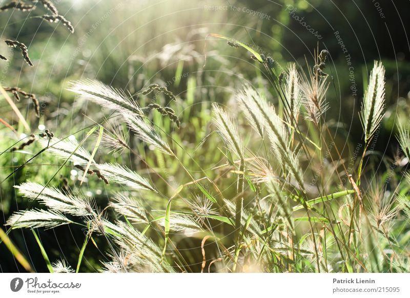 forget about summer Natur schön Pflanze Sommer Blatt Blüte Gras Landschaft Stimmung hell glänzend Umwelt ästhetisch Sträucher Klima wild