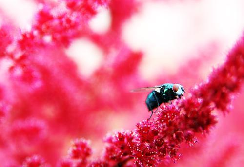 farbenfroh Natur Pflanze Sommer schön Blume rot Tier Auge Blüte Wiese außergewöhnlich Garten fliegen rosa Park Wildtier