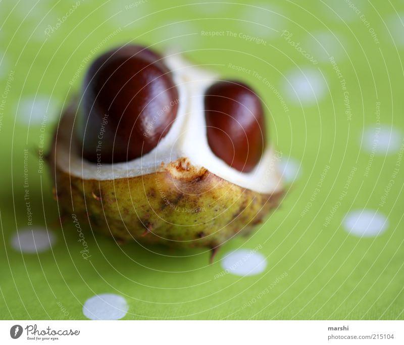 das Kastanienmonster Natur Pflanze braun grün Frucht gepunktet hellgrün herbstlich Herbst Dekoration & Verzierung Unschärfe Farbfoto Menschenleer Tischwäsche
