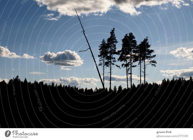 die sechs Baumriesen Natur Himmel Wolken Ferne Wald Landschaft Schönes Wetter Skandinavien