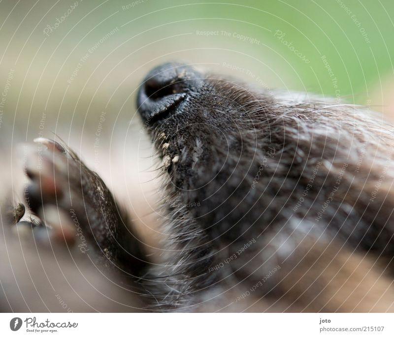 Igelchen Natur schön Tier träumen Nase schlafen Sicherheit Vertrauen Müdigkeit niedlich Pfote Geborgenheit kuschlig stachelig Kuscheln Perspektive