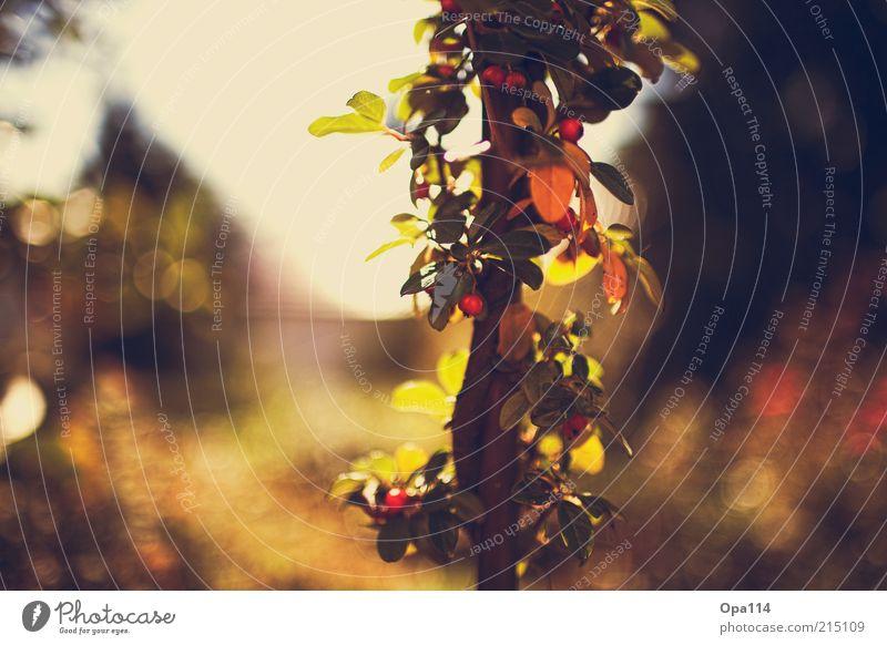 Spätsommer Natur grün blau Pflanze rot Sommer Herbst Glück träumen Landschaft Zufriedenheit warten Umwelt gold frisch Fröhlichkeit
