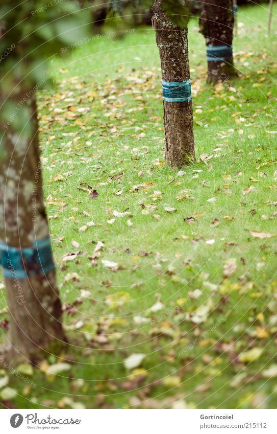 Fall Umwelt Natur Herbst Baum Gras Blatt Garten Wiese trist Baumstamm herbstlich Laubbaum Herbstlaub Farbfoto mehrfarbig Außenaufnahme Tag