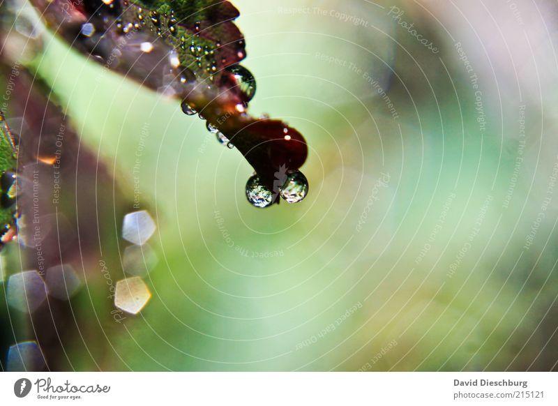 Eyes of the rain Natur Pflanze grün Sommer Wasser Blatt ruhig Leben Frühling Regen Wetter frisch Wassertropfen nass Jahreszeiten violett
