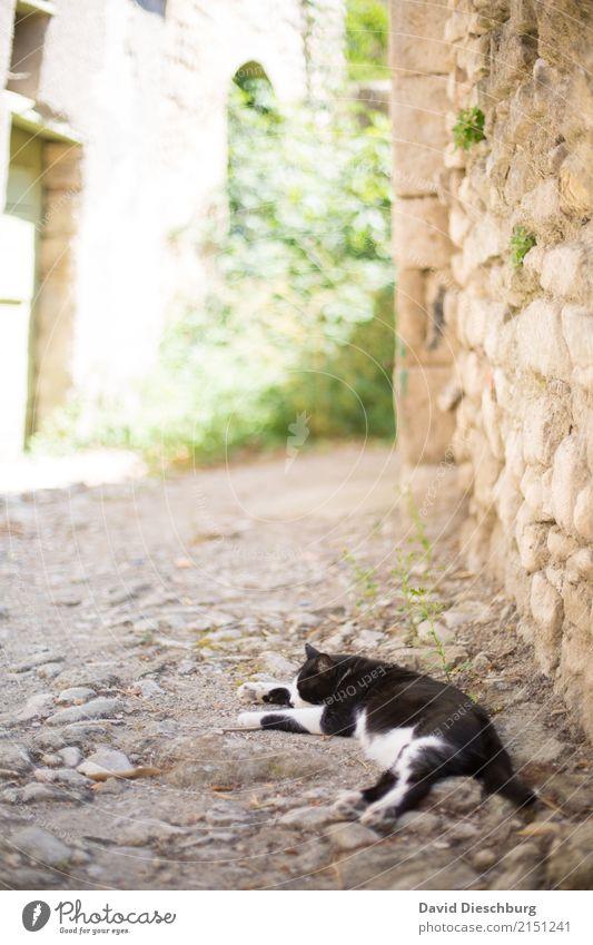 Mittagsschläfchen Katze Ferien & Urlaub & Reisen Sommer grün weiß Tier schwarz gelb Wand Frühling Mauer Tourismus liegen Idylle Schönes Wetter schlafen