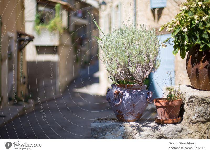 Rosmarin de Provence Ferien & Urlaub & Reisen Pflanze Sommer Erholung Tier ruhig Wärme Wand Frühling Wege & Pfade Mauer Tourismus Ausflug Wachstum