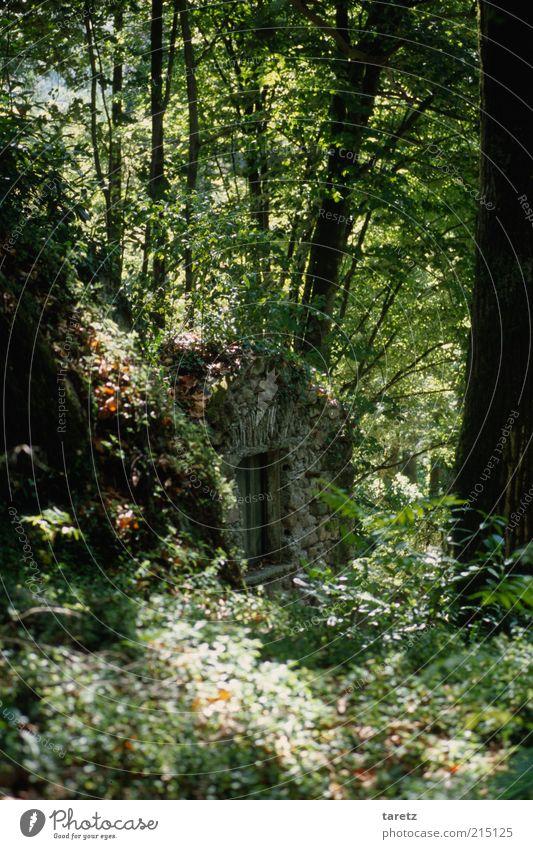 Natur alt Baum Sommer ruhig Wald Sträucher wild fantastisch geheimnisvoll Keller ungestört Versteck verborgen Bunker Sonnenstrahlen