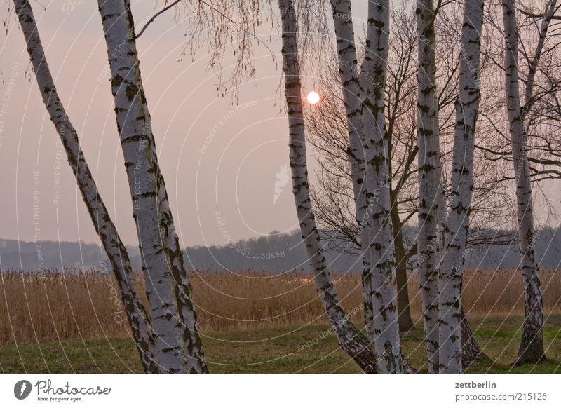 Herbst Ferien & Urlaub & Reisen Ausflug Umwelt Natur Landschaft Wasser Baum Park Seeufer Teich Müdigkeit Einsamkeit Birke sacrow Sonnenuntergang Dunst Nebel