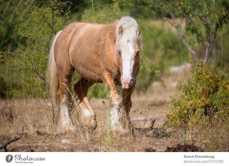 Horsepower Natur Ferien & Urlaub & Reisen Sommer schön weiß Tier Wald gelb Frühling Wiese braun Feld laufen Schönes Wetter Landwirtschaft Pferd