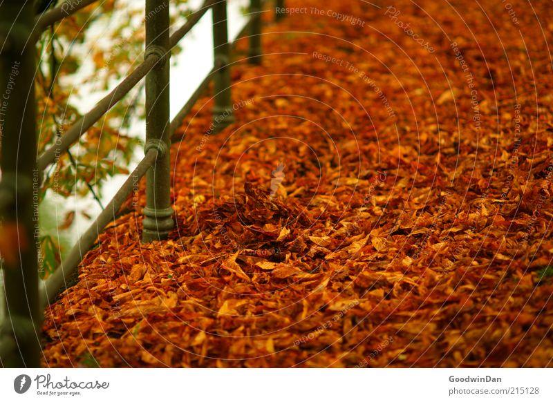 Herbstgold. II Umwelt Natur Park schön viele Wärme braun rot Stimmung Herbstlaub herbstlich Herbstfärbung Herbstbeginn Blatt Geländer Farbfoto Außenaufnahme