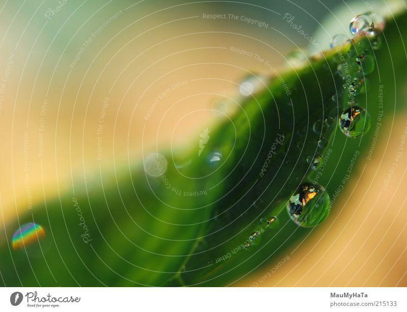 Wassertropfen auf Pflanzen Natur Urelemente Sonne Sonnenlicht Herbst Klima Regen Gras Blatt chaotisch Design Energie Erholung exotisch Farbe Kontakt Kontrolle
