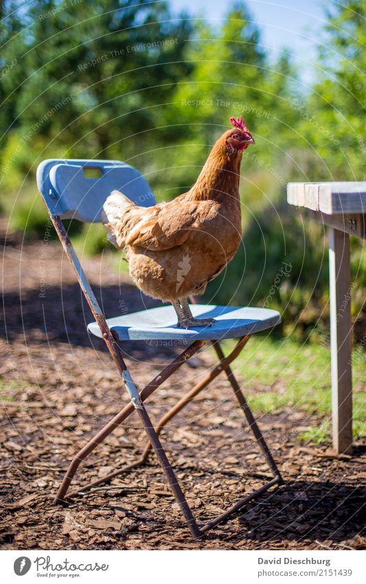 """""""Was gibt's heute zu Mittag?"""" Natur Ferien & Urlaub & Reisen Sommer grün Tier Frühling lustig Lebensmittel braun Vogel Ernährung Idylle stehen Schönes Wetter"""
