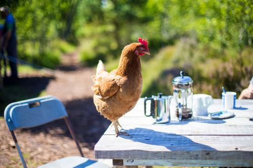 Tischhaltung Natur Ferien & Urlaub & Reisen Sommer Tier Frühling lustig Glück Tourismus braun Ausflug Zufriedenheit Ernährung Idylle Schönes Wetter