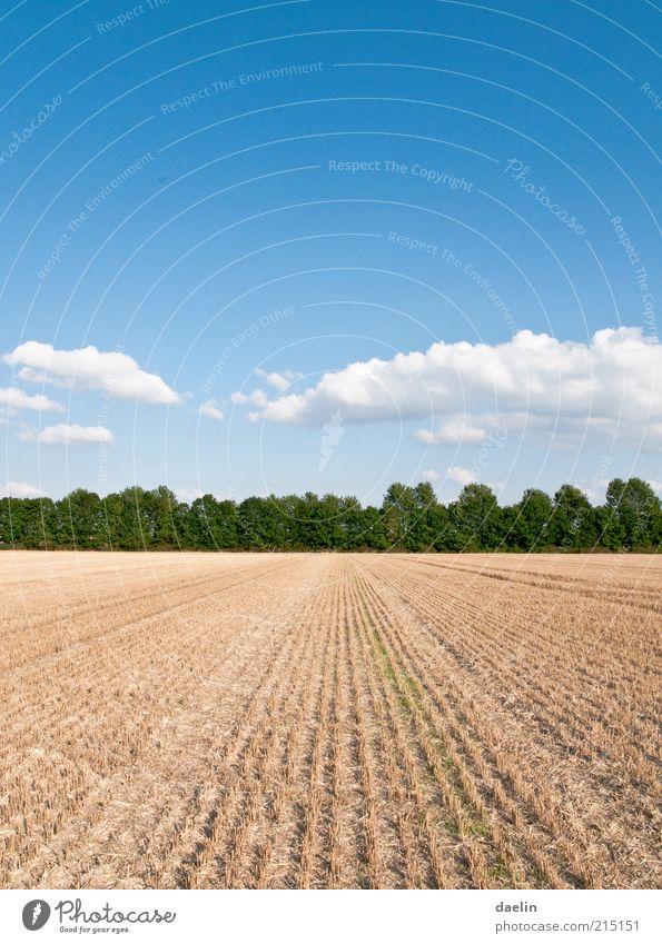 field after the yield of wheat Landschaft Himmel Wolken Horizont Herbst Schönes Wetter Pflanze Nutzpflanze Feld blau Ernte Weizenfeld Farbfoto Außenaufnahme