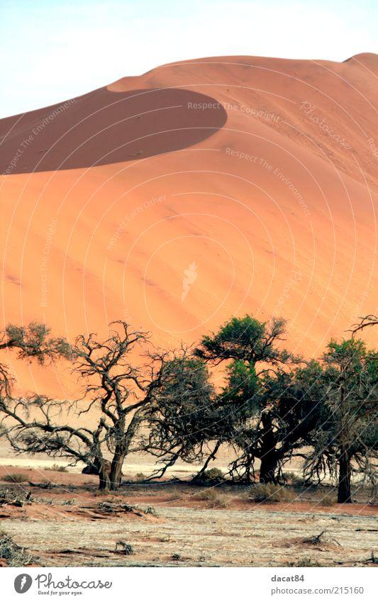 Namib Baum Pflanze Sommer ruhig Sand Wärme Landschaft Klima Wüste Sehnsucht Schönes Wetter Dürre Steppe Ausdauer Namibia Oase