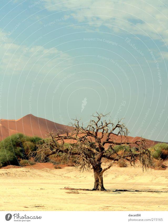 Death of the Tree Umwelt Natur Landschaft Pflanze Urelemente Erde Sand Himmel Sommer Klima Wetter Schönes Wetter Baum Sträucher Wüste Oase heiß Gefühle