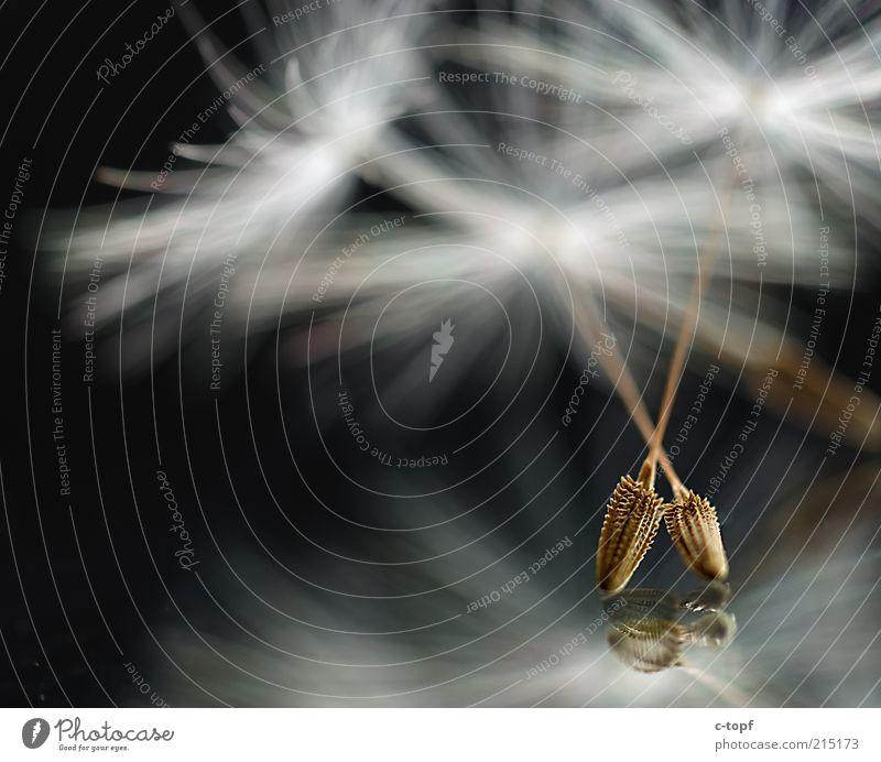 Tanzend Natur schön Pflanze Blüte Zufriedenheit 2 Tanzen Fröhlichkeit Pollen Euphorie Frühlingsgefühle