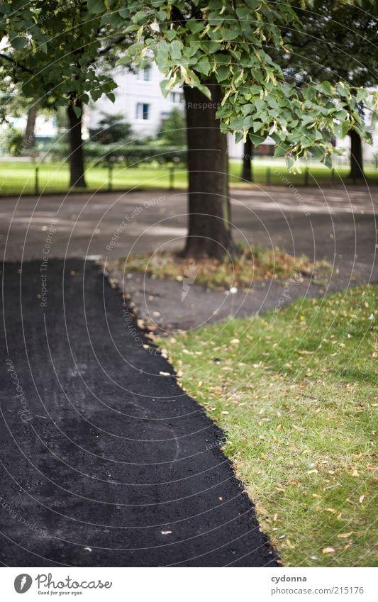 Neue Wege gehn Natur Baum Straße Umwelt Leben Bewegung Gras Wege & Pfade Park ästhetisch planen Lifestyle Baustelle einzigartig Vergänglichkeit Asphalt
