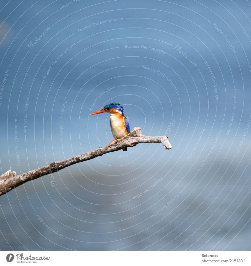 Ausschau halten Natur Sommer Sonne Tier Ferne Umwelt natürlich Küste klein Freiheit Vogel Ausflug Wildtier Abenteuer Seeufer nah