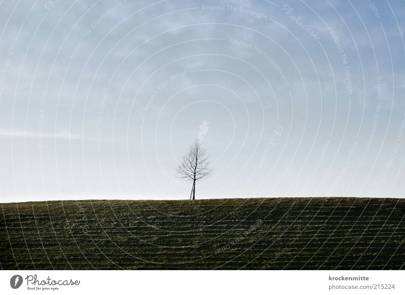 Six Feet Under Himmel Natur blau grün Baum Pflanze Einsamkeit Ferne Umwelt Tod Leben Wiese Landschaft Herbst oben Gras