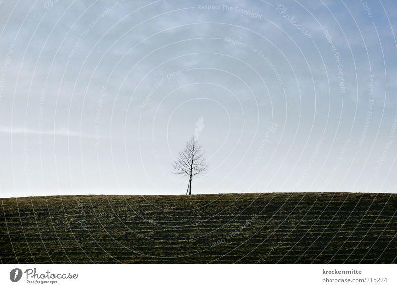 Six Feet Under Umwelt Natur Landschaft Pflanze Himmel Baum Wiese Hügel trist blau grün Langeweile Traurigkeit Einsamkeit einzigartig Leben Tod Ferne Gras