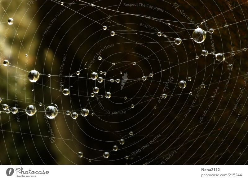 The Web Natur Wasser dunkel Regen Wassertropfen Regenwasser Tropfen Netz Tau Vernetzung Spinnennetz Kondenswasser Makroaufnahme