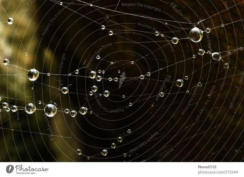 The Web Wassertropfen Tropfen Regen Regenwasser Kondenswasser Tau Spinnennetz Netz Natur Makroaufnahme Außenaufnahme Nahaufnahme Detailaufnahme dunkel