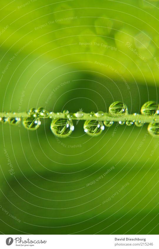 Family Tears Natur Pflanze grün Sommer Wasser Leben Frühling Gras Regen Wetter frisch Wassertropfen nass viele harmonisch Kugel