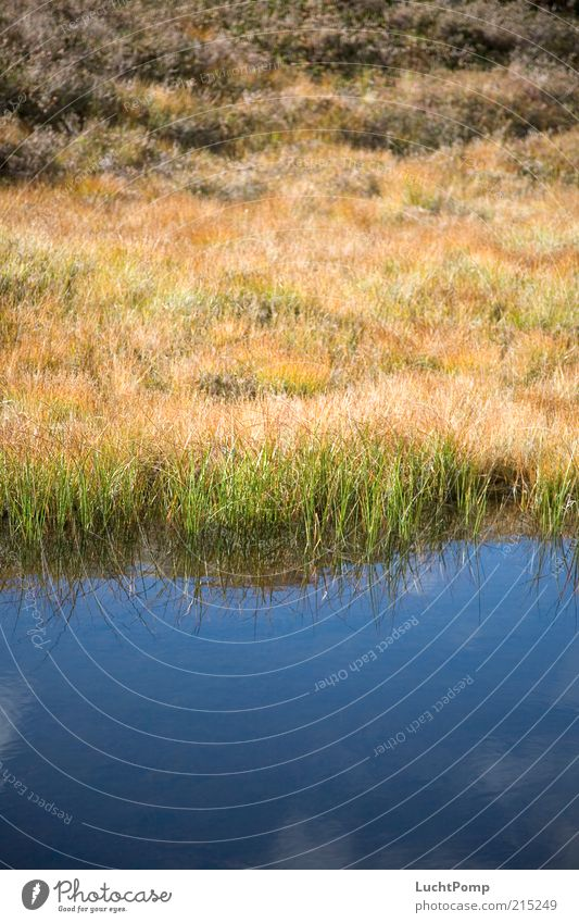 Farbenteppich Grasland Reflexion & Spiegelung Wasser Himmel himmelblau Blauer Himmel Wolken Pflanze gelb braun mehrfarbig Wachstum See Seeufer Flussufer