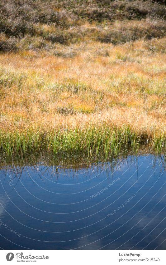 Farbenteppich Wasser Himmel blau Pflanze ruhig Wolken gelb Gras See Landschaft braun Wachstum Fluss Seeufer Schönes Wetter Flussufer