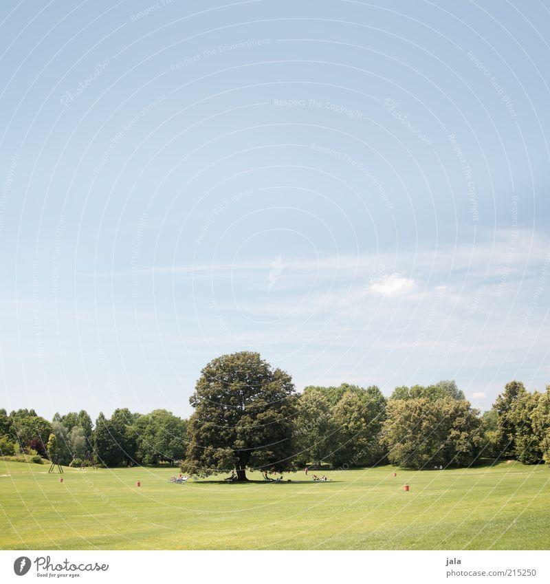 und es war sommer Natur Landschaft Himmel Schönes Wetter Pflanze Baum Gras Park Wiese frisch schön blau grün Farbfoto Außenaufnahme Menschenleer