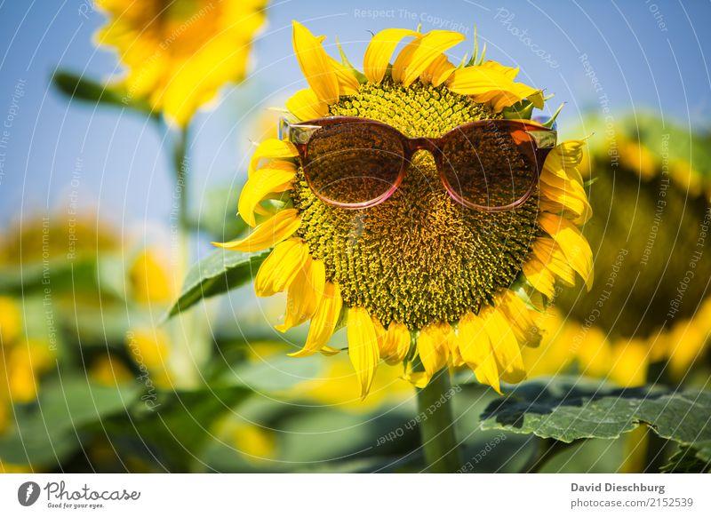 Be cool Natur Ferien & Urlaub & Reisen Pflanze Sommer grün Blume Erholung Tier Gesicht Wärme gelb Blüte Frühling lustig Wiese Schönes Wetter