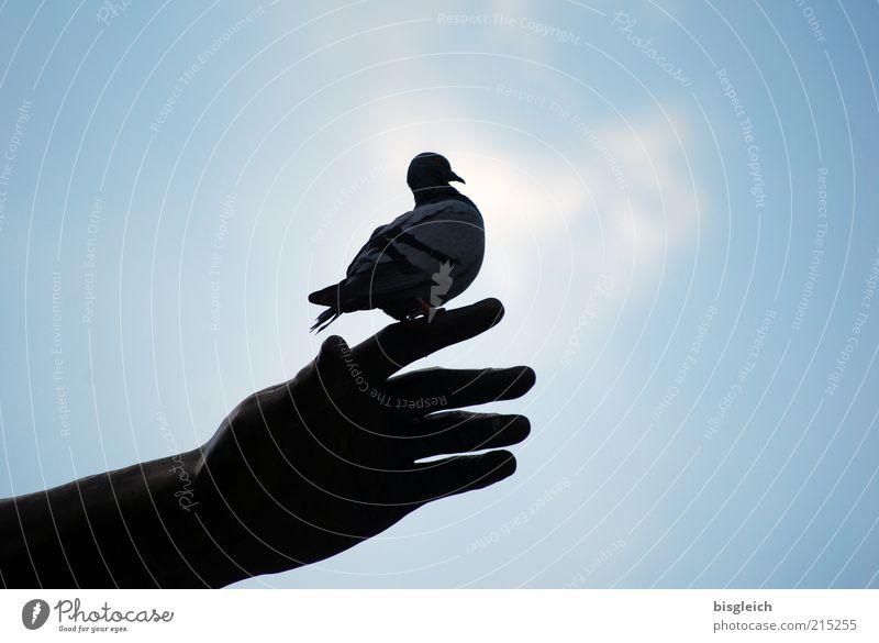 Besser die Taube ... Hand Vogel 1 Tier sitzen warten blau Wachsamkeit geduldig ruhig Himmel Farbfoto Gedeckte Farben Außenaufnahme Textfreiraum links