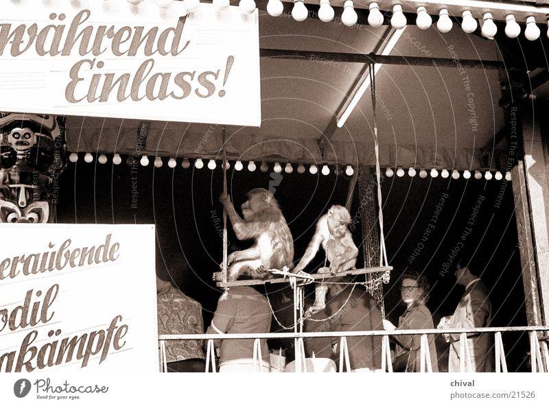 Affentheater Jahrmarkt Veranstaltung Eingang Krokodil Besucher Publikum Show Freizeit & Hobby Freude Theaterschauspiel