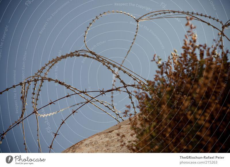 Krieg und Frieden Himmel blau Wand grau Mauer braun Sicherheit Sträucher Schutz Grenze Barriere Draht Grundbesitz Israel Besitz Stacheldraht