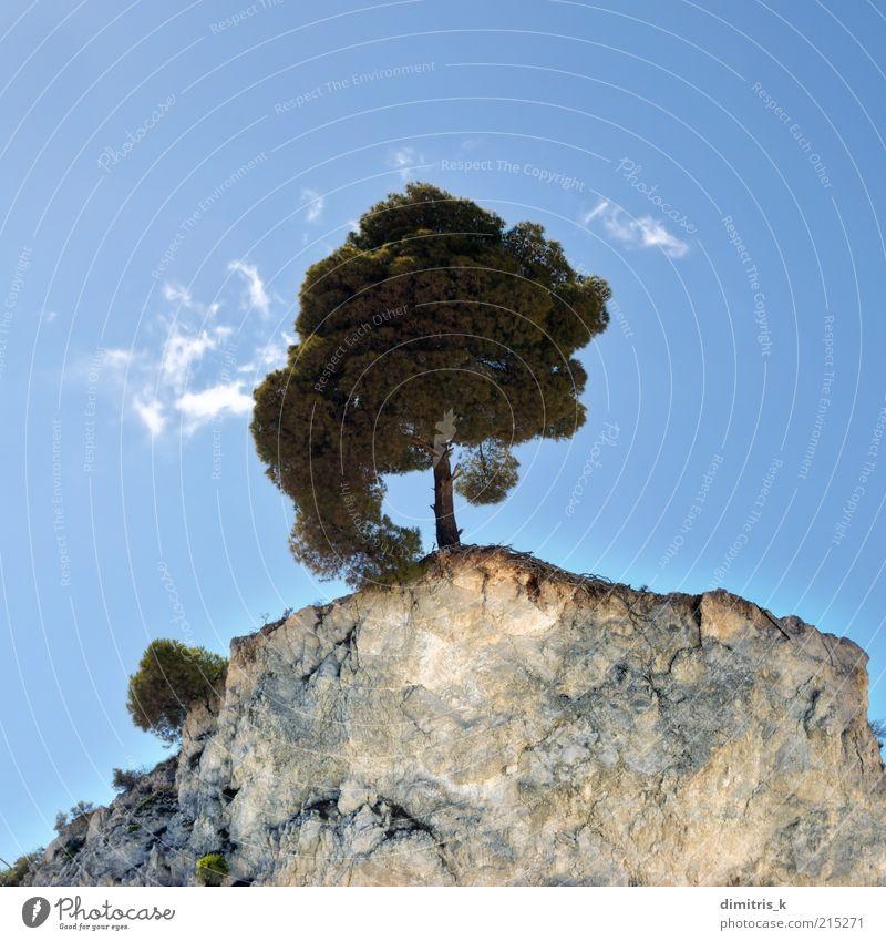 Klippenbaum schön Berge u. Gebirge Umwelt Natur Landschaft Pflanze Himmel Wolken Baum Hügel Felsen Stein natürlich blau grün Einsamkeit Farbe Hintergrundbild