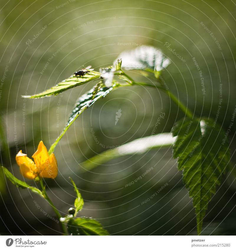 Fliege im Sonnenlicht Natur grün Pflanze Sommer Blatt Tier gelb Herbst Gefühle Blüte Frühling Stimmung glänzend Fliege Wetter Umwelt