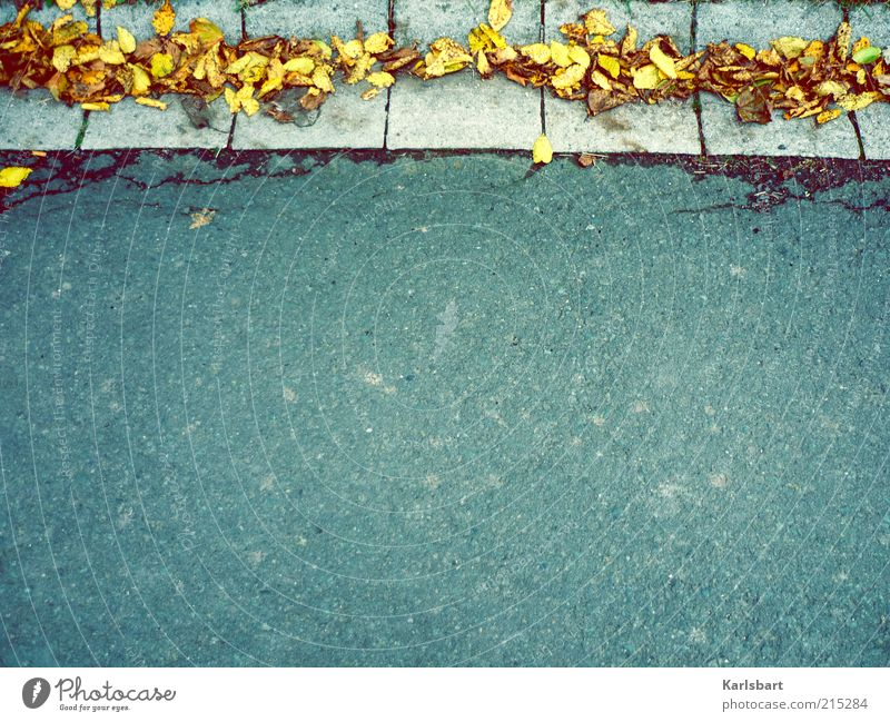 randerscheinung. Lifestyle Umwelt Natur Herbst Blatt Dorf Stadtrand Verkehr Verkehrswege Straße Wege & Pfade Wandel & Veränderung Straßenrand Bürgersteig Saum
