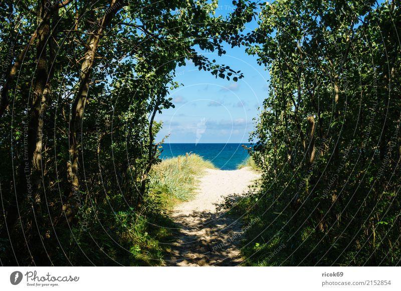 Strand an der Ostsee bei Graal Müritz Natur Ferien & Urlaub & Reisen blau Baum Landschaft Meer Erholung Wolken Wege & Pfade Küste Tourismus Freizeit & Hobby