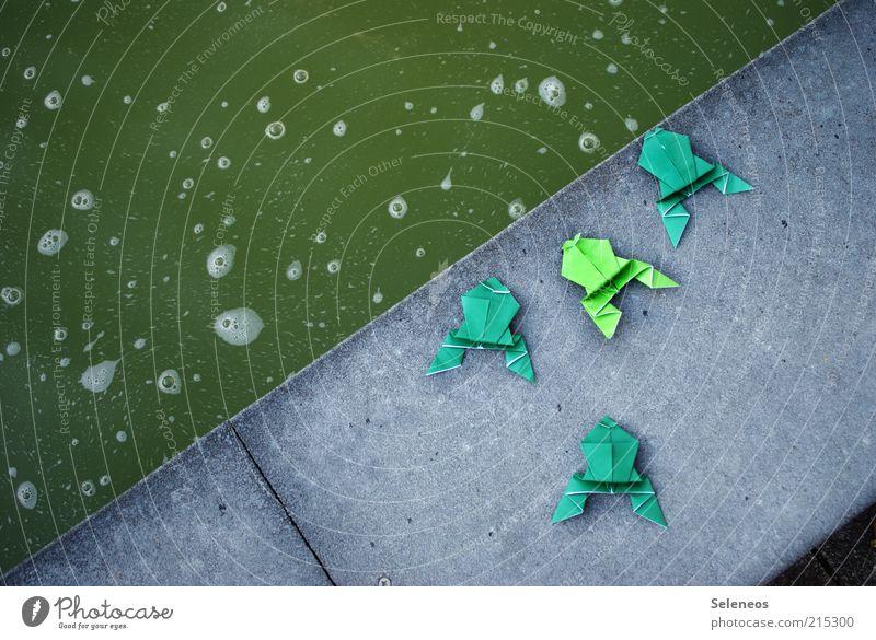 Froschsuppe Freizeit & Hobby Spielen Basteln Origami Teich Tier Stein klein Wasser Becken Beckenrand Farbfoto Außenaufnahme Menschenleer Tag Vogelperspektive 4