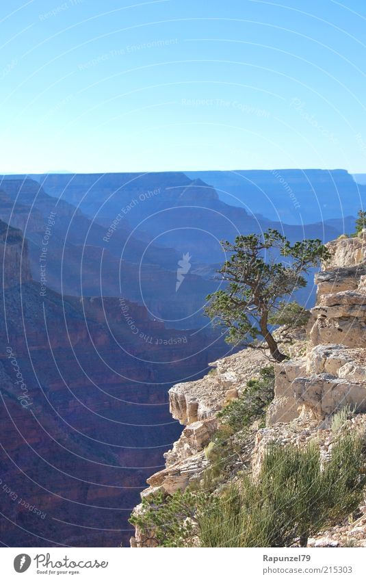 der Sonne entgegen Natur Himmel Baum grün blau Sommer Landschaft braun Felsen tief Am Rand Schlucht Berge u. Gebirge Grand Canyon