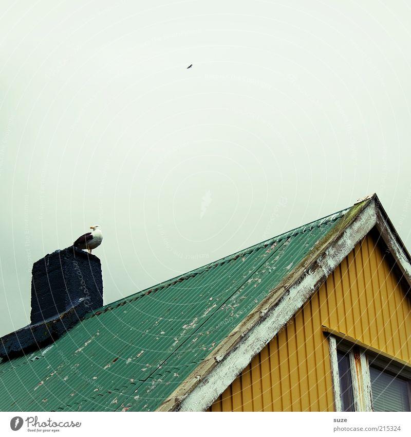 Ne maf grün Tier Haus gelb Fenster Vogel Wildtier sitzen Dach Hütte Möwe Island Schornstein abblättern überblicken Dachgiebel
