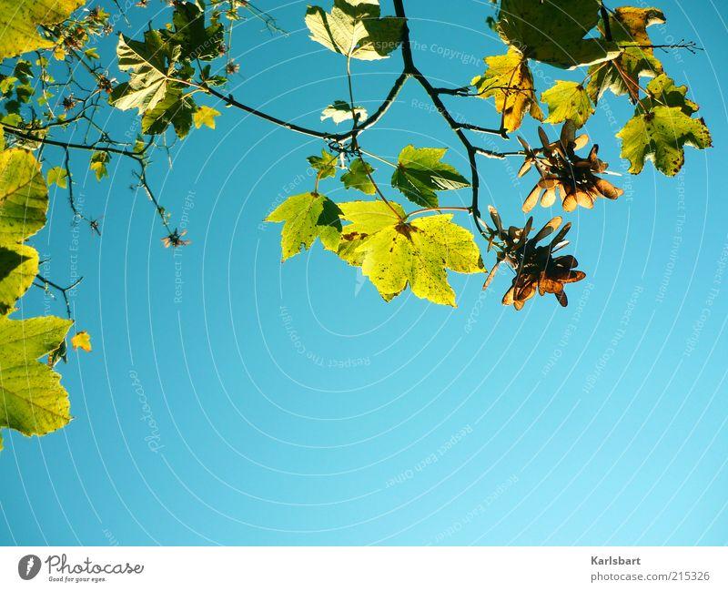 herbstluftlicht. Leben ruhig Umwelt Natur Himmel Wolkenloser Himmel Sonnenlicht Herbst Schönes Wetter Herbstlaub Ast Hintergrund neutral Farbfoto mehrfarbig