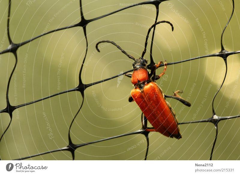 Klettergerüst rot orange braun Klettern Netz festhalten Insekt kämpfen Käfer Fühler Makroaufnahme