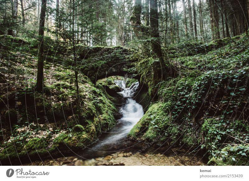 Wildromantisch Natur alt Pflanze Sommer grün Wasser Landschaft Baum Erholung ruhig Wald Leben Umwelt außergewöhnlich Freiheit Ausflug