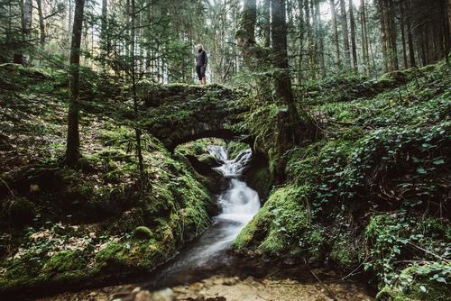 Romantische Brücke im Wald Natur alt Sommer Wasser grün Erholung ruhig Lifestyle Leben außergewöhnlich Freiheit Ausflug Zufriedenheit Freizeit & Hobby wild