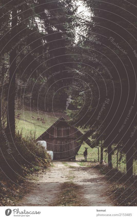 Der stille Beobachter Natur Baum Landschaft Tier ruhig Wald dunkel Umwelt Herbst Wege & Pfade Freiheit Freizeit & Hobby Ausflug wandern stehen Abenteuer